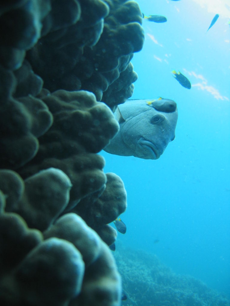 Coral and tropical fish on a Great Keppel Island cruise